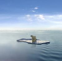 Polar bear - caught in Bush's trap