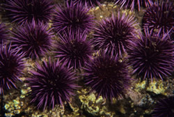 Ocean acidification portends an ocean in trouble