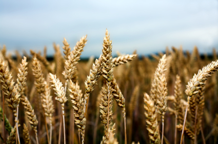 Drought is a growing threat to agriculture and food supply
