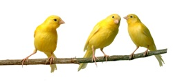 Birds: Canaries in a Coal Mine for Global Warming