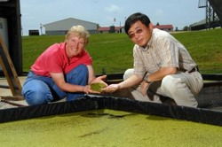 Drs. Anne Stomp and Jay Cheng pose at a test facility where they have been growing duckweed using animal wastewater.