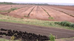 Peat bogs are important ?carbon sinks,? storing on average 10 times more CO2 than other ecosystems. As such, the widespread conversion of peat bogs into commercial uses around the world is serious cause for alarm. Pictured here: Peat production, for use in domestic fireplaces, underway in the Irish Midlands.