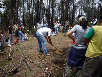 tree planting in Mexico