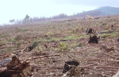 Industrial tree farmers co-opt UN forest management principles