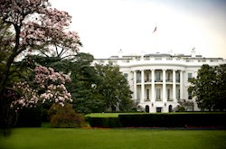 White House and cherry blossoms