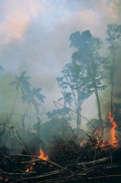 Tropical Rainforest Destruction